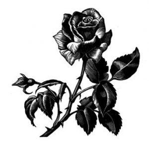 roza2